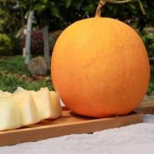 缅甸黄河蜜瓜-生鲜水果-辰颐物语