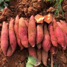 雷州西瓜红蜜薯-生鲜蔬菜-辰颐物语