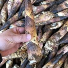 临安雷笋5斤-生鲜蔬菜-辰颐物语