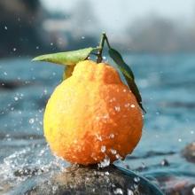 丑橘不知火5斤-生鲜水果-辰颐物语