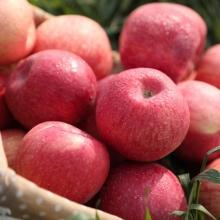 洛川苹果5斤-生鲜水果-辰颐物语